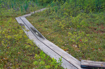 You can access the quaking Cranberry Bog by way of a short plank boardwalk winding its way across the floating spagnum moss.