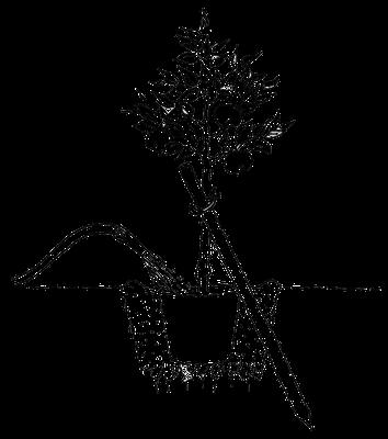 Außergewöhnlich Obstbaum pflanzen - Kessler Baumschule - Pflanzen für Ihren Garten @UY_72