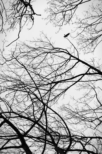 Dänholm Schwarzweißfotografie schwarz weiß fotografieren lernen ruhig still mecklenburg vorpommern dänholm stralsund strelasund ostsee minimalismus minimalistische