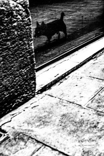 Barcelone, street photography, noir et blanc, black and white, art, travel, chien