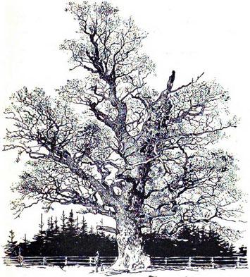Eiche um 1883, A. Mertens
