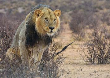 Namibia Gruppenreise intensiv Safari