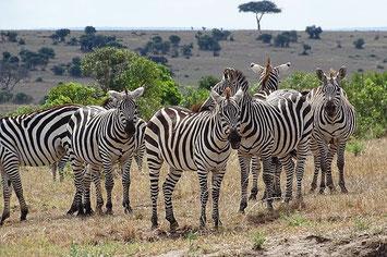 Ol Pejeta Kenia Safari