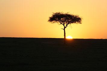 Kenia Safari und Strand, Kenia Safari