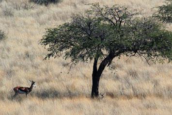 Northern Cape Südafrika Reise