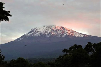 Kilimanjaro Nationalpark Tansania Safari