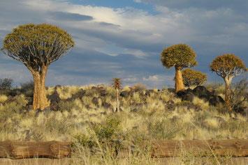 Kalahari auf einer Südafrika Kleingruppenreise