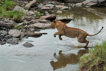 Masai Mara Safari Kenia
