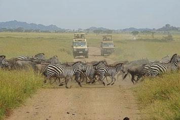 Große Migration Tansania Safari, Reise