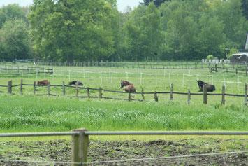 ... mit vielen müden Pferden