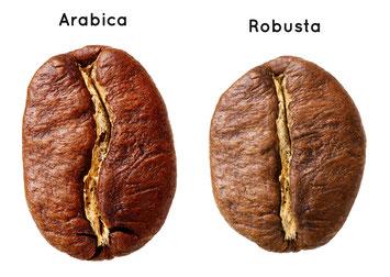Unterschiede Arabica Robusta