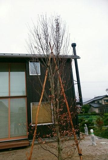 与謝野町の家。 京都府与謝野町の薪ストーブの家に、 ブナのシンボルツリーを植栽させていただきました。