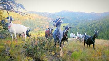 Goat Starter Setup List - The Goat Farm - Goat Patrol