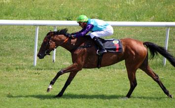 Pferd im Rennen