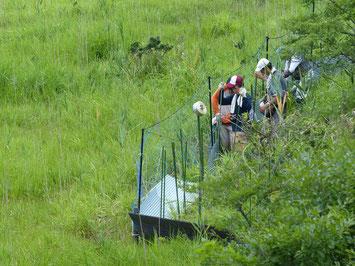 湿原でネットの設置