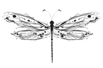 The dragonfly is a symbol of transformation
