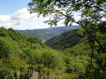 """Das Waldstück """"la Grangette"""" mit Sicht auf Charnéac im Hintergrund"""