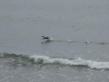 海鳥が飛び立つ瞬間!!