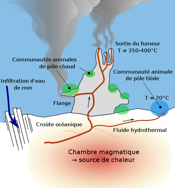 Trajet de l'eau de mer dans un fumeur noir.