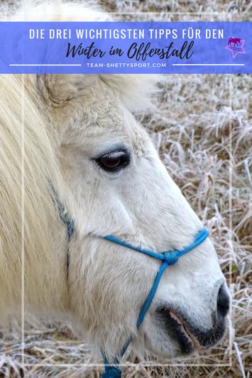 Winter im Offenstall - Pferdehaltung