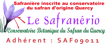 safranerio bulbe crocus safran français souche quercy
