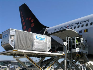 Brussels Airlines operates A330s on all of its long-haul routes  -  courtesy SN