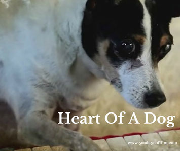 Essay heart of a dog