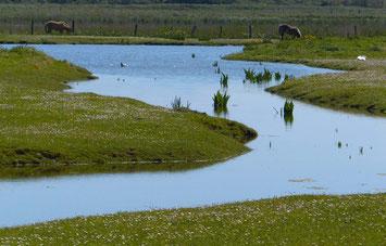 Ault, Cayeux-sur-mer, Baie de Somme, fossiles, oursins, galets, polders, marais, étangs, oiseaux, amphibiens, plantes