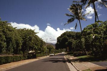 道の左がカハラ公園、道の右側は、前庭の木々で見えないが、個人の住宅が並ぶ