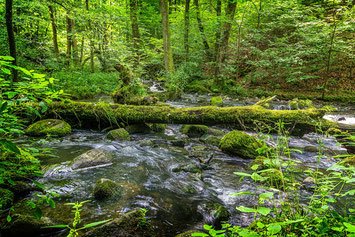 Fluss im natürlichen Verlauf (Symbolbild; Foto: pixabay.com / FrankGeorg)