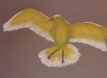 Vogel 50x60