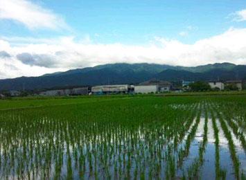 米造りに有利な川上の水田