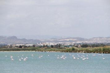 Salinen Santa Pola Flamingos Lagune