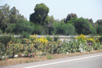 Mittelstreifenbegrünung Autobahn Marokko