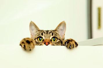 Rund um die Katz! Vortrag von Frau Daniela Eglseder KatzenVERHALTENSBERATERIN