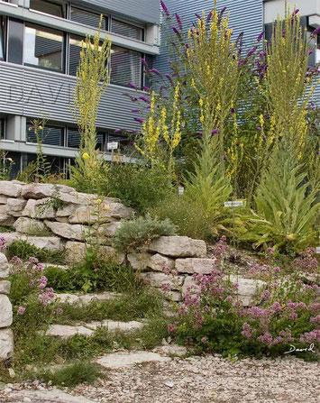 Naturgarten Trockenmauer Naturerlebnisraum
