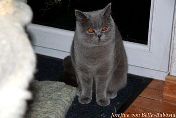 Josefina von Bella Babosia, geb. 3.02.2012