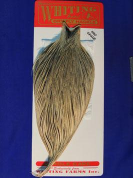 Whiting Hahnencape Pro