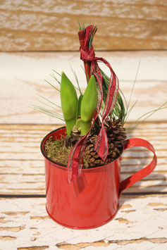 "Amaryllis ""All in Red Style"""