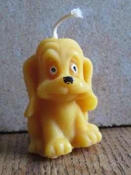 bougie chien