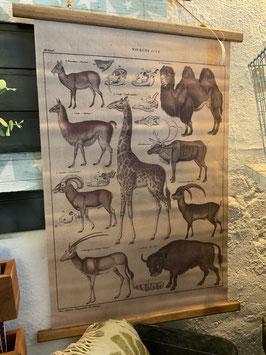 Wandkarte Wiederkäuer von Clayre & Eef
