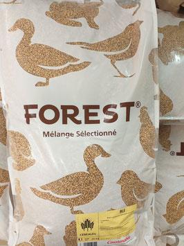 BLÉ FOREST