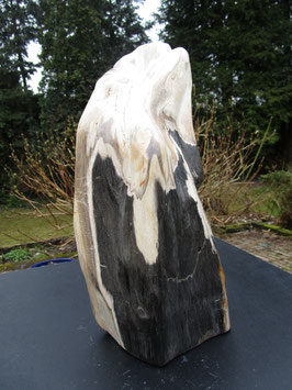 Versteend hout / Apenbroodboom