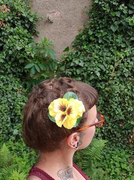 gelbe Stiefmütterchen Haarblüte