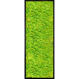 120x30 Tableau lichen stabilisé vert citron