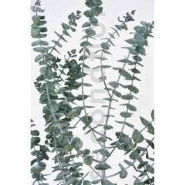Eucalyptus Baby Blue Vert