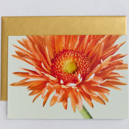 Grußkarte  - Orange Gerbera