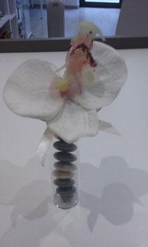 Orchidée Ivoire