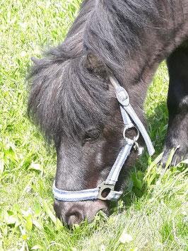 Pferdeflüstern, ab 7 Jahren