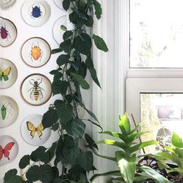 Insectenbordjes